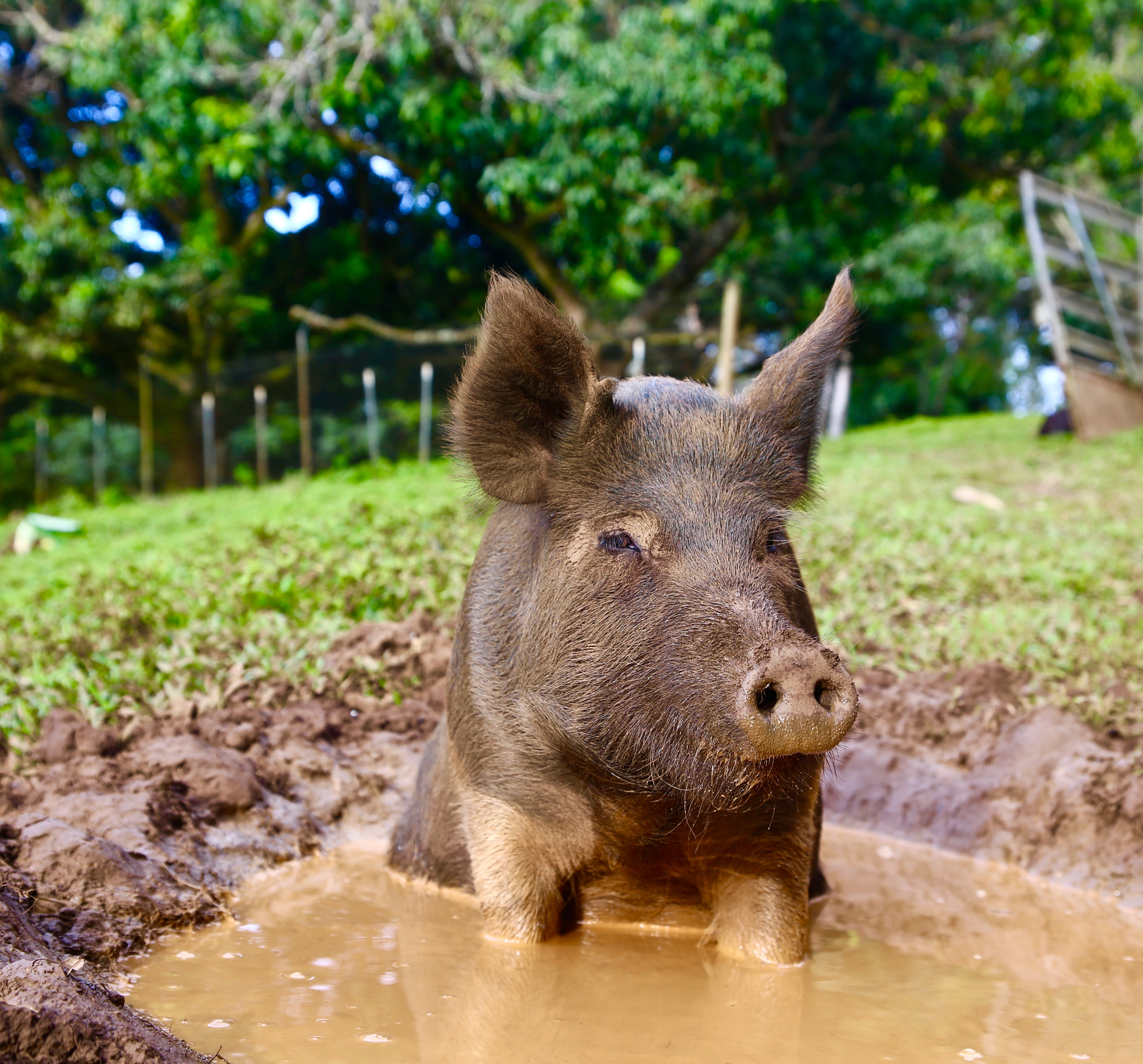 Tour the Sanctuary | Leilani Farm Sanctuary